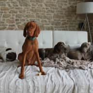 Must LOVE dogs and be very active. SW France house sit. Prefer experienced dog owners.