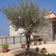 Cat & House Sitter, Crete