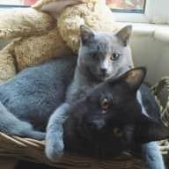 Cat sitter for Ziggy & Salem