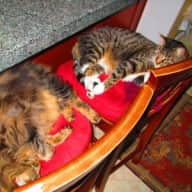 Outdoor Cats need loving attention; beautiful locale, Marin CA, north of San Franciso