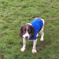 Home sitter needed for 2 spaniels near Guildford