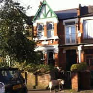 Pet sitter needed for 2 weeks in London