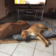 House and pet sitter needed for dog, cat, sheep and goats, rural France