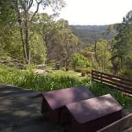 East Lindfield NSW AU, 2 cardigan corgis, 14 km from Sydney CBD