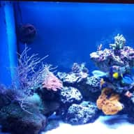 House and pet sitter needed for 6 weeks in April/May and for 3 months starting December 2015 to look after Siberian Husky and marine fish tank