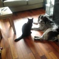 Irish Pet and house sitting  cat & dog who are Best Friends