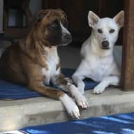 Would you care to look after my two dogs Bindi and Maggie