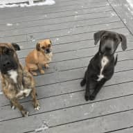 Need dog sitter for 3 dogs in West Hartford CT