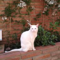 House with terrace in the centre of Barcelona - 2 cats need petsitter