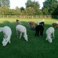 House/Pet sitter(s) required in a lovely rural location in East Herts, 30 mins Cambridge