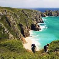 Dog and house sitter required in beautiful Cornish countryside
