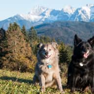 Looking for a petsitter for our 2 dogs in the city of Munich, Germany for 10 days in July