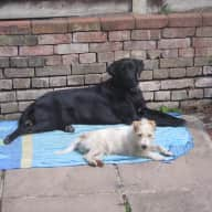 Monty & Mollie need looking after for 3 weeks in October