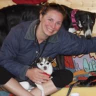 Looking for a reliable house sitter for my 3 dogs in my little studio in Geneva Switzerland