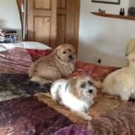 Pet sitter for 3 small dogs, mother, son and daughter