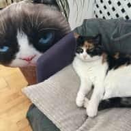 Cat sitter Chelsea