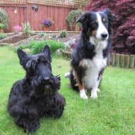 Pet sitter needed for 2 dogs in Surrey
