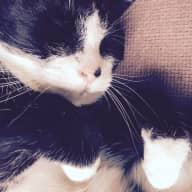 Cat sitter required - House in central London (Archway/Tufnell Park)