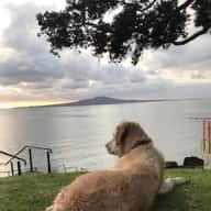 House and Pet sit Takapuna, Auckland NZ