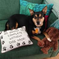 Pet sitter wanted for a much loved 11 year old rescue dog