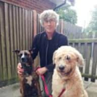 Pet sitter needed for two dogs in Market Harborough, Leciestershire