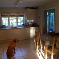A week in Epsom with Darcie the Labrador