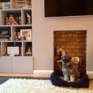 House & Dog Sitter required for March 2016