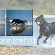 House and dog sitter for my Lab x for about 5 weeks from 23rd May in Noosaville.
