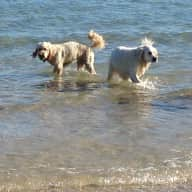 Dog Sitter Required for house with Views of Poole Harbour