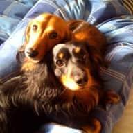 Swanley house & dog sitting