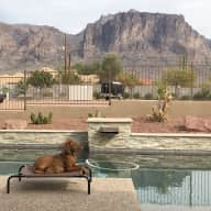 Cute dog, comes with pool and a view!