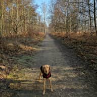 Sitter need to look after dog and cat in three bedroom house near Godalming, Surrey