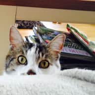House sitter required for one adorable cat