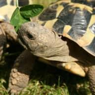 Pet sitter for tortoises & terrapins in West London