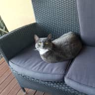 House sit Wodonga, new home one cat