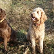 Pet sitter for 2 dogs/2 cats needed for up to 3 weeks in September - enjoy the rural countryside and relax in our century old fieldstone school house