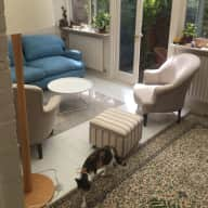 Flat in Willesden Junction with 2 kitties