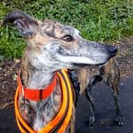 Cosy quiet first floor flat near Holyrood with resident cuddly lurcher