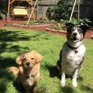 2 Sweet Dogs Need Loving Sitter - NW of Atlanta (Car Included)