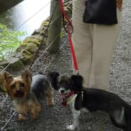 Pet sitter needed for my home and two small dogs. County Durham