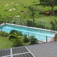 Two much loved family cats in a lovely new house and pool on the beautiful far North Coast of NSW