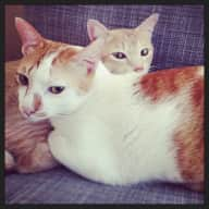 Pet sitter needed for our 2 friendly cats