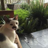 Playful, chatty feline in Observatory (Cape Town) is looking for company