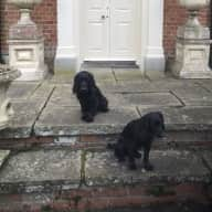 House & Pet Sitter Wanted