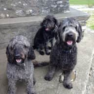 Come stay in the lovely Lake district with our amazing Labradoodles