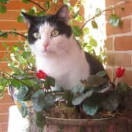 Our beloved cat is looking for a sitter in the town of Modena, northern Italy