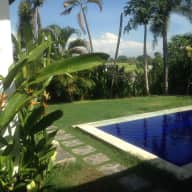 Five Lovely Bali Dogs in Private Villa in Canggu