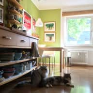 Catsitter for two lovely BLH cats in 83qm appartment