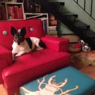 Dogsitter needed for young and old dogs:)