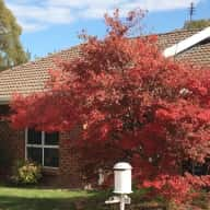 House Sitter for 2 dogs in August/September 2018 in Canberra